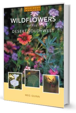 Wildflowers of the Desert Southwest